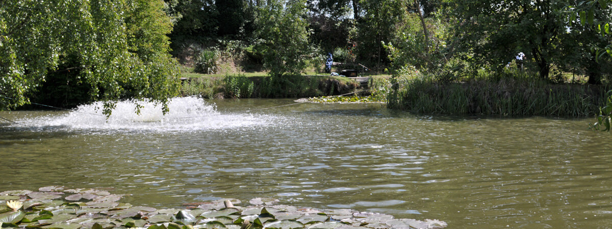 Choose to fish from four different well stocked ponds